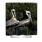 Pelican Threesome Shower Curtain