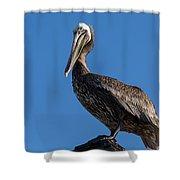 Pelican Watch Shower Curtain