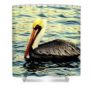 Pelican Waters Shower Curtain