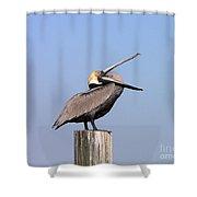 Pelican Yawn Shower Curtain