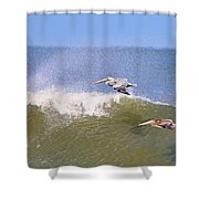 Pelicans 3868 Shower Curtain