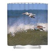 Pelicans 3870 Shower Curtain