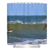 Pelicans 3967 Shower Curtain