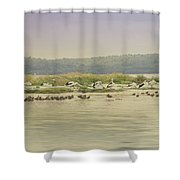Pelicans At Poddy Shot Shower Curtain