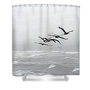 Pelicans Dinning At The Rip Shower Curtain