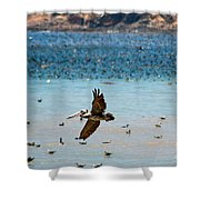 Pelicans Flocking On The Ocean Shower Curtain