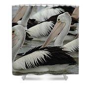 Pelicans Galore Shower Curtain