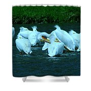 Pelicans Hanging Out Shower Curtain