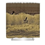 Pelicans In The Surf Shower Curtain
