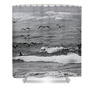 Pelicans Lunching At Ft. Stevens Oregon Shower Curtain
