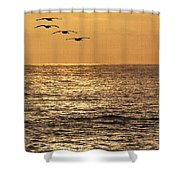 Pelicans Ocean And Sunsetting Shower Curtain
