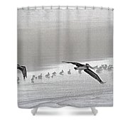 Pelicans Off For A Foggy Day Of Fishing Shower Curtain