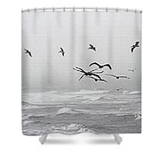 Pelicans On A Windy Foggy Day On The Oregon Coast Shower Curtain