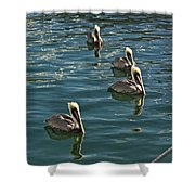 Pelicans On The Water In Key West Shower Curtain