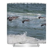 Pelicans Over The Water Shower Curtain