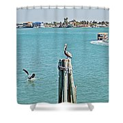Pelicans Rule Shower Curtain