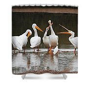 Pelicans Singing Auld Lang Syne Shower Curtain