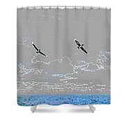 Pelicans Sky Shower Curtain