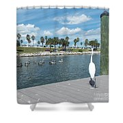 Pelicans Watching Shower Curtain