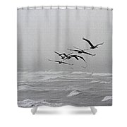 Pelicans With Full Bellies Shower Curtain