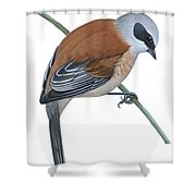 Penduline Tit  Shower Curtain by Anonymous
