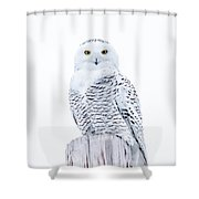 Penetrating Stare Shower Curtain