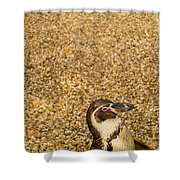 Penguin And Pebbles Shower Curtain