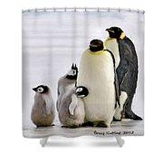 Penguin Family Shower Curtain