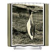 King Penguin Shower Curtain