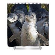 Penguins Shower Curtain by Steven Ralser