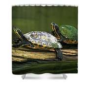 Peninsula Cooter Turtles Shower Curtain