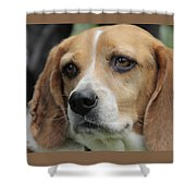 The Beagle Named Penny Shower Curtain