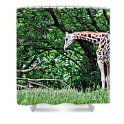 Pensive Giraffe Shower Curtain
