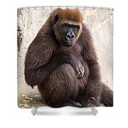 Pensive Gorilla Shower Curtain