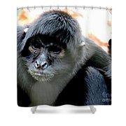 Pensive Monkey Shower Curtain