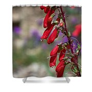 Penstemon Shower Curtain by Kathy McClure