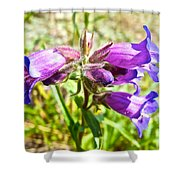 Penstemon On Miles Canyon Trail To Canyon City Near Whitehorse-yk  Shower Curtain