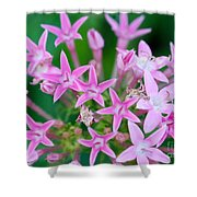 Pentas 'cranberry Punch' Flowers Shower Curtain