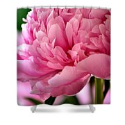 Peonies In The Pink Shower Curtain