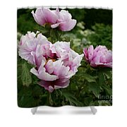 Peony Bush Shower Curtain