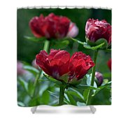 Peony Garden 7661a Shower Curtain