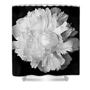 Peony In Bw Shower Curtain