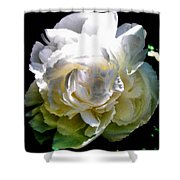 Peony In Morning Sun Shower Curtain