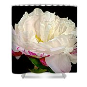 Peony In Repose Shower Curtain