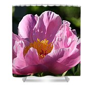 Peony Pink Shower Curtain