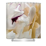 Peony Shower Curtain by Steven Ralser