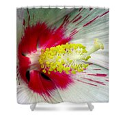 Peppermint Flame 01a Shower Curtain