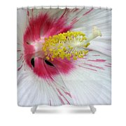 Peppermint Flame 02 Shower Curtain