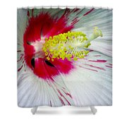 Peppermint Flame 02a Shower Curtain