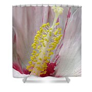 Peppermint Flame 03 Shower Curtain